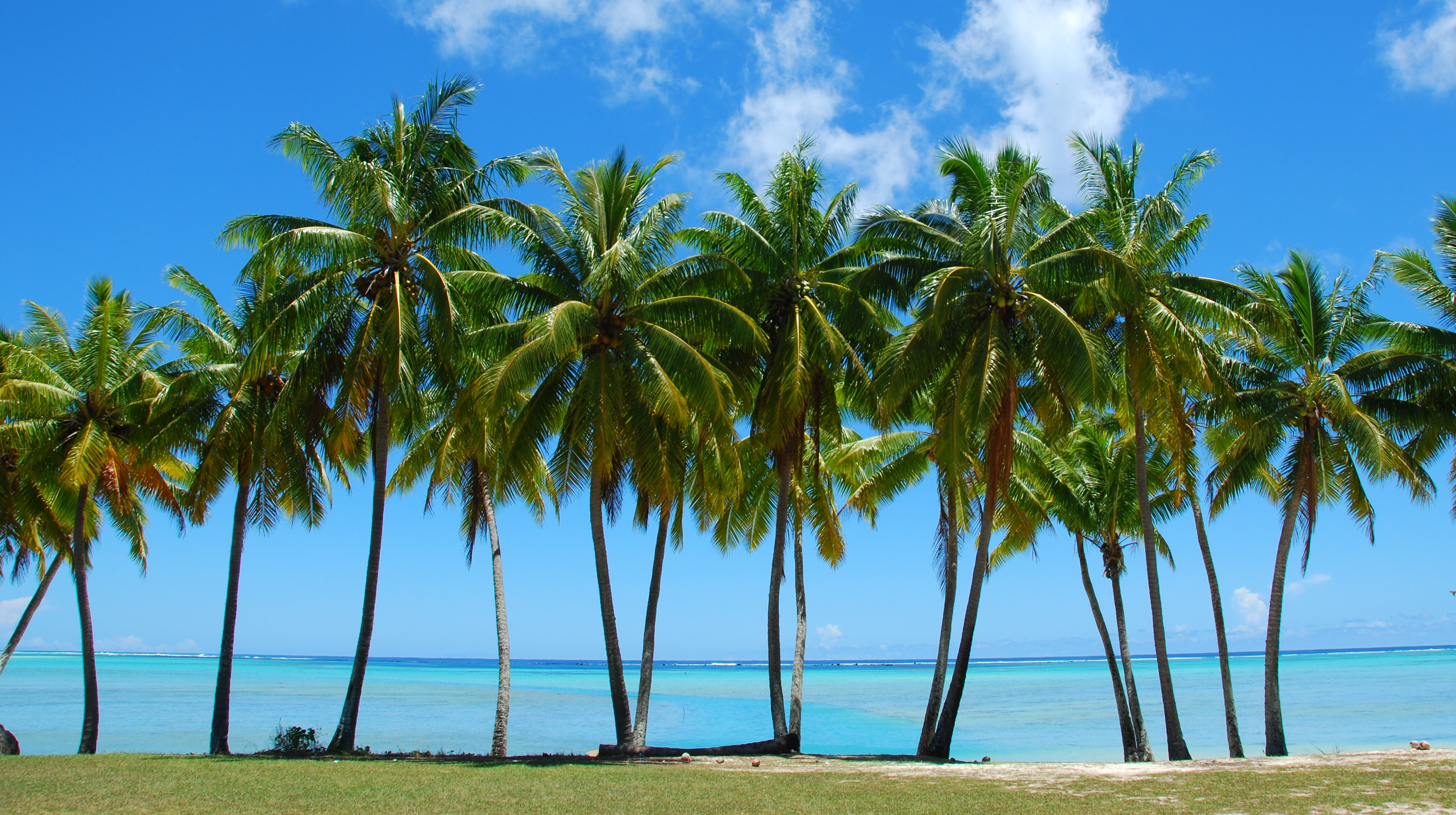 Palms and other tropical plants